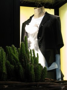 Piante grasse d'ingresso e sfondo vetrinetta - Succulent plants at the entrance and window in the background